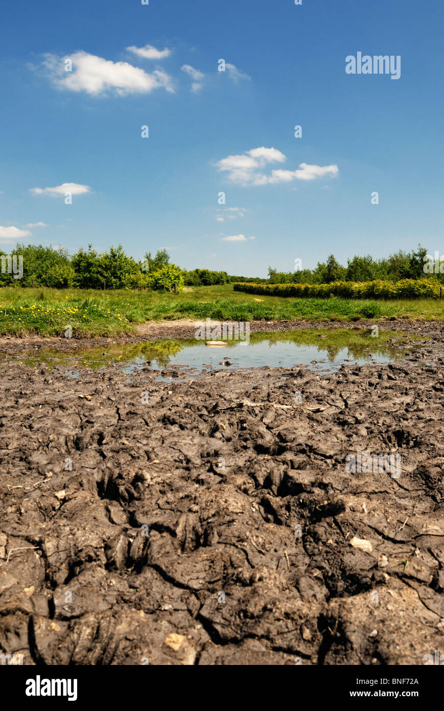 small pond drying up in hot weather - Stock Image
