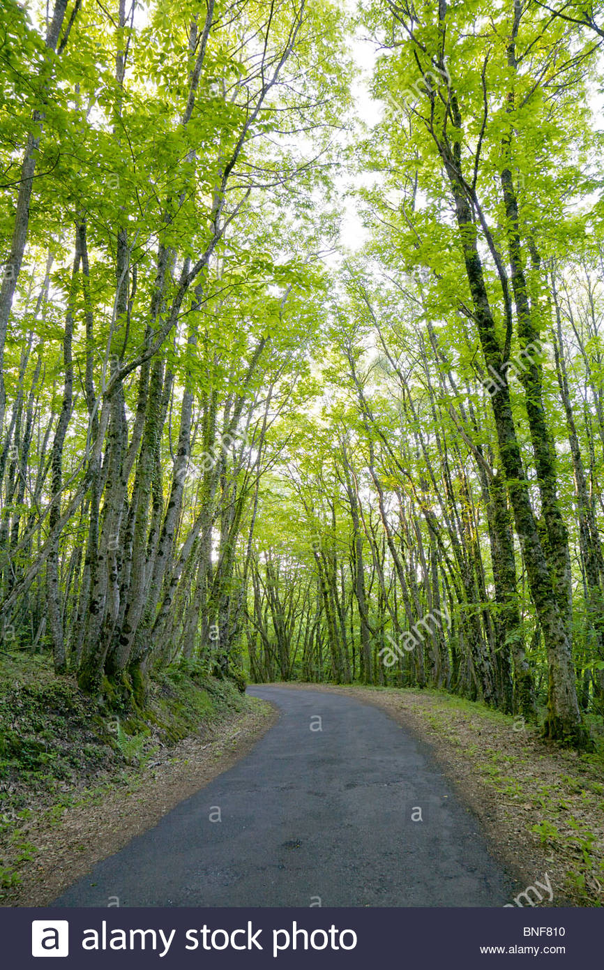 Small country road winding through lush hardwood forest. La Creuse, Limousin, France. - Stock Image