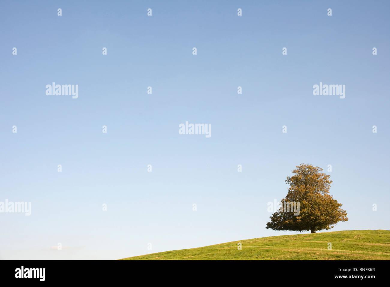 Tree in autumn - Stock Image