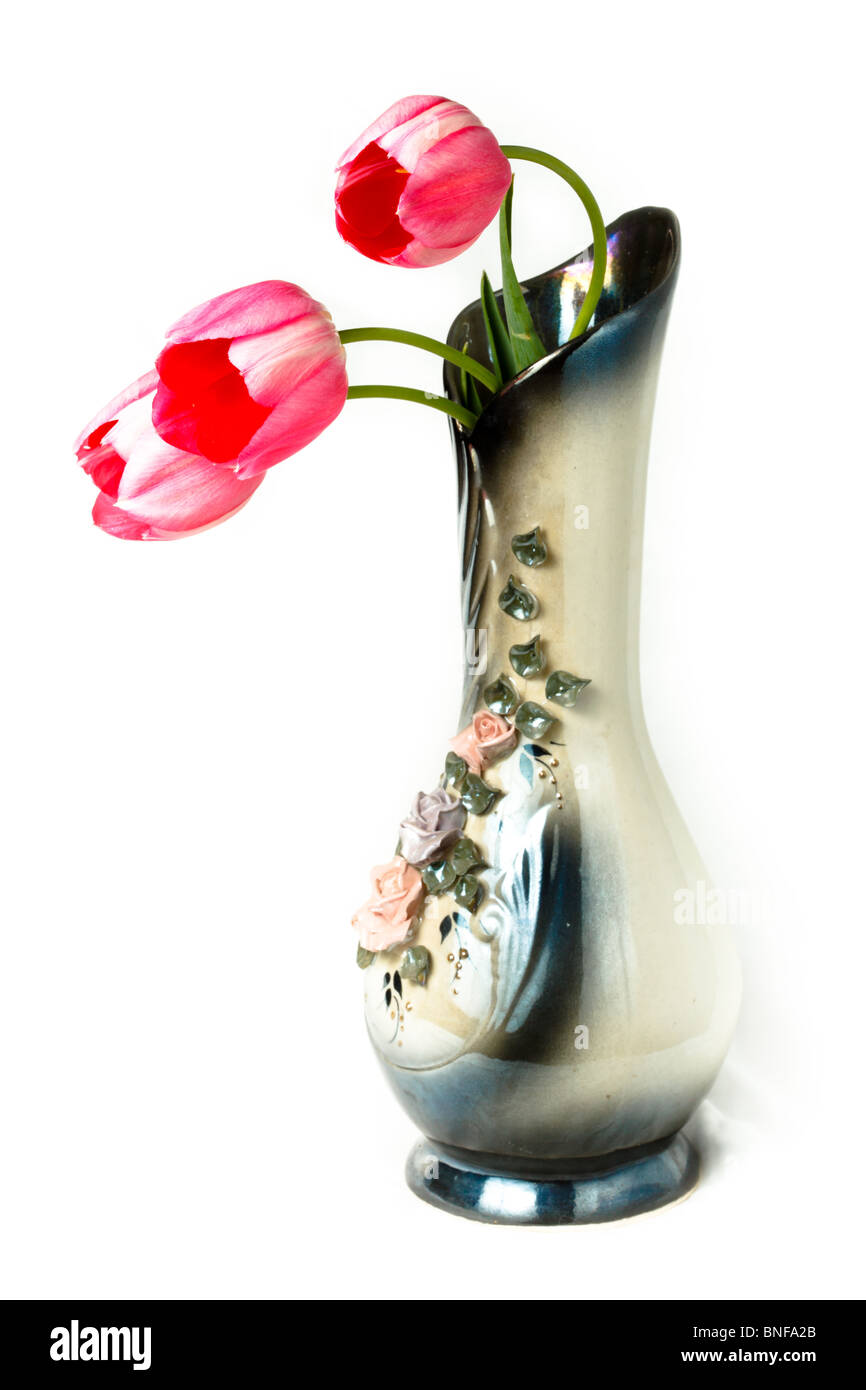 Tulipa, Tulip. Flowers in studio against a white background. - Stock Image