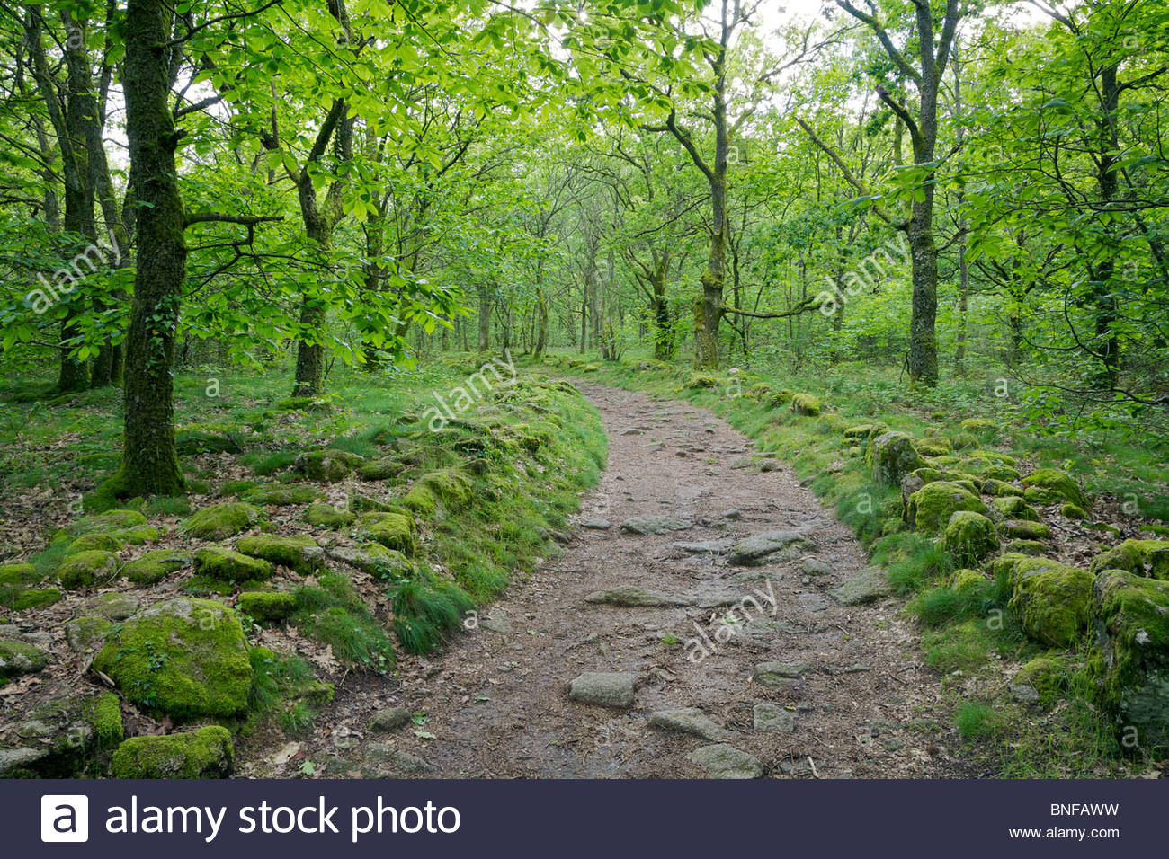 Curve in a dirt trail through a beautiful hardwood forest in rural France. Near Toulx-Sainte-Croix, La Creuse, Limousin, - Stock Image