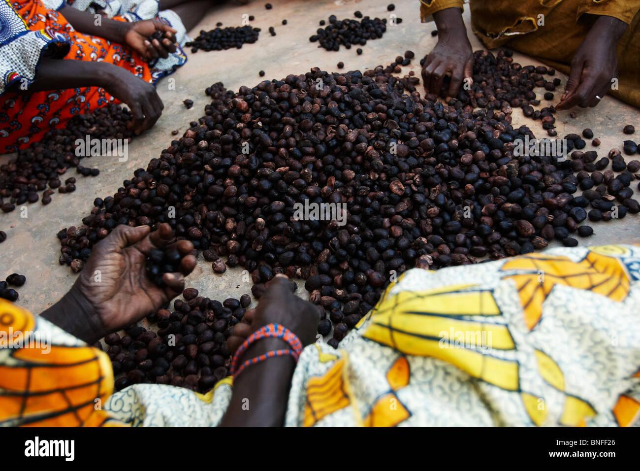 Women sort shea nuts at the Dembayouma shea processing center in the village of Bankoumana, near Bamako, Mali - Stock Image