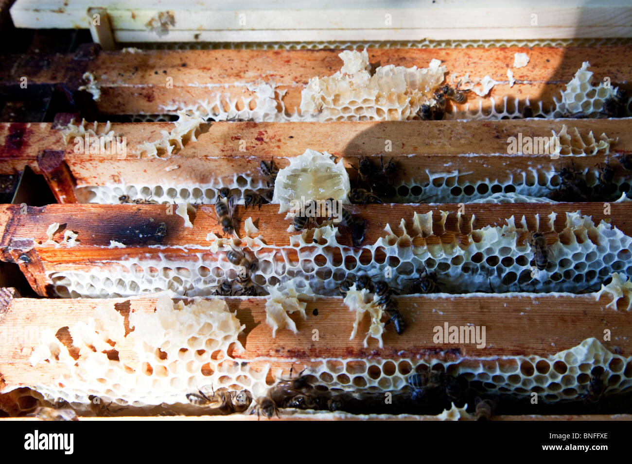 A close-up of the frames inside a hive box - Stock Image