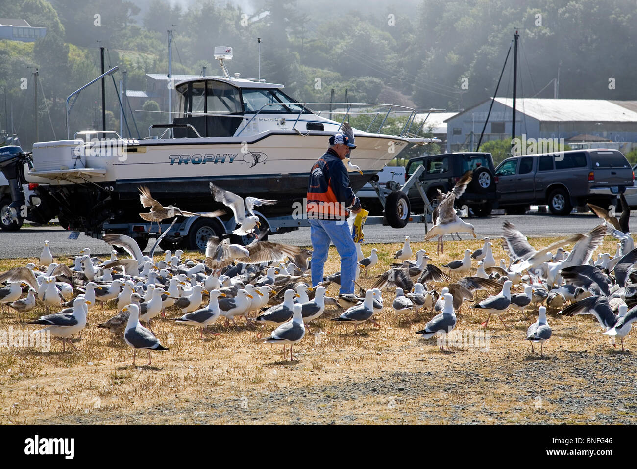 A man feeding seagulls at the harbor in Brookings, Oregon, on the Oregon Pacific Coast - Stock Image