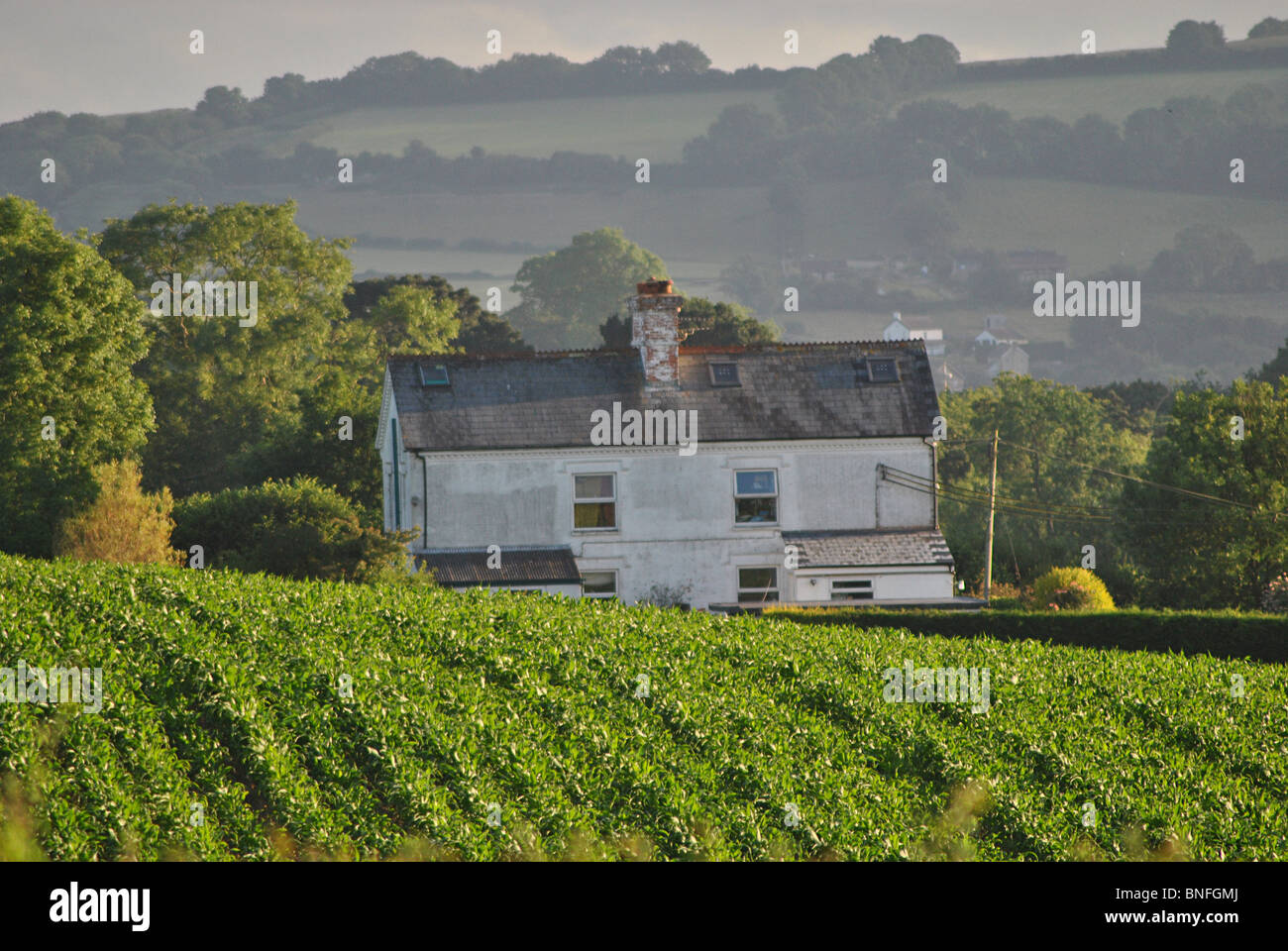 A secluded farmhouse cottage in the Marshwood Vale, Dorset, England - Stock Image