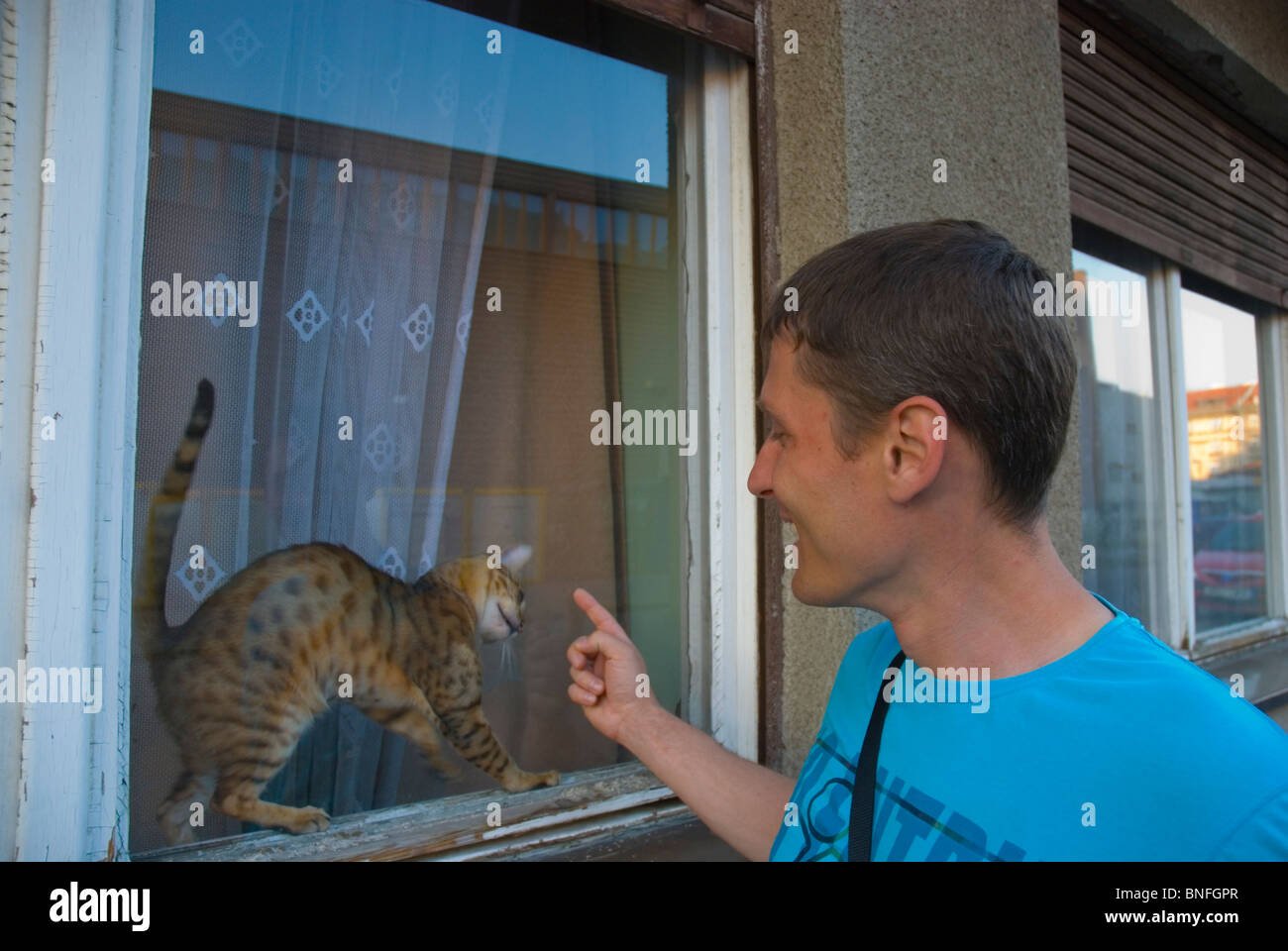 Russian man playing with a cat behind a window pane Prague Czech Republic Europe - Stock Image
