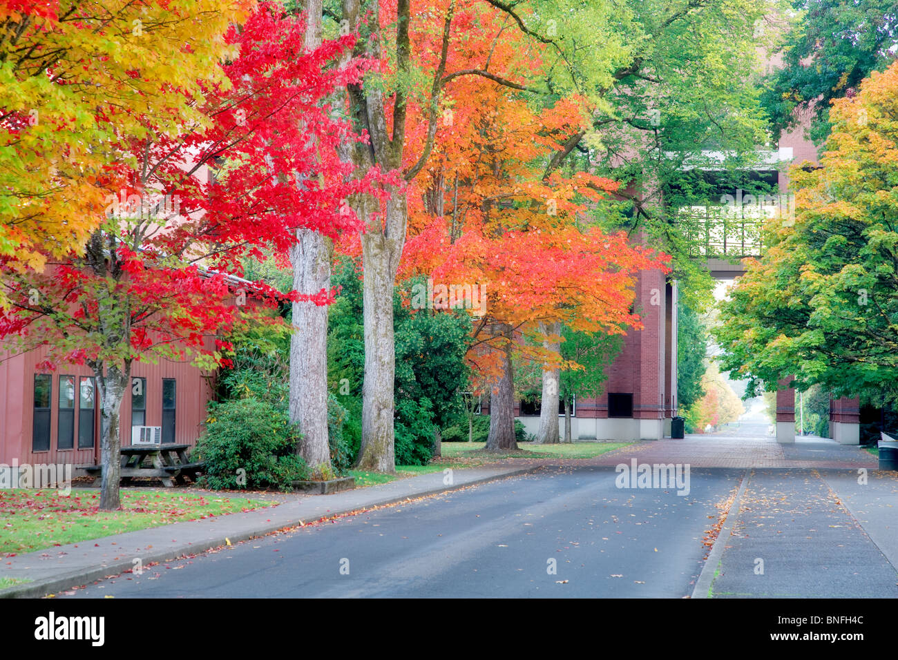 Road to Agricultural and Life Sciences building with fall color. Oregon State University. - Stock Image