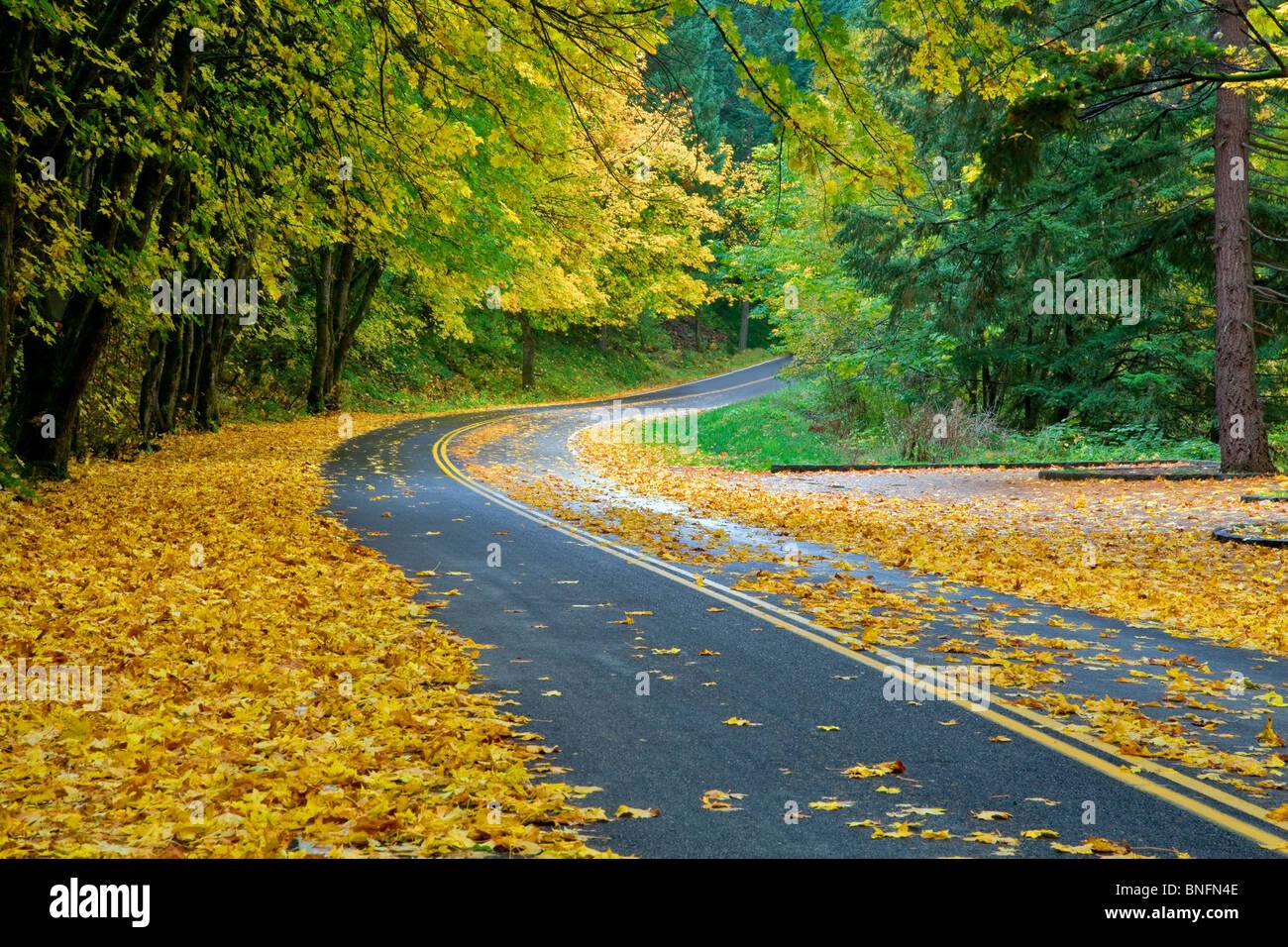 Columbia River Gorge National Scenic Area road. Oregon - Stock Image