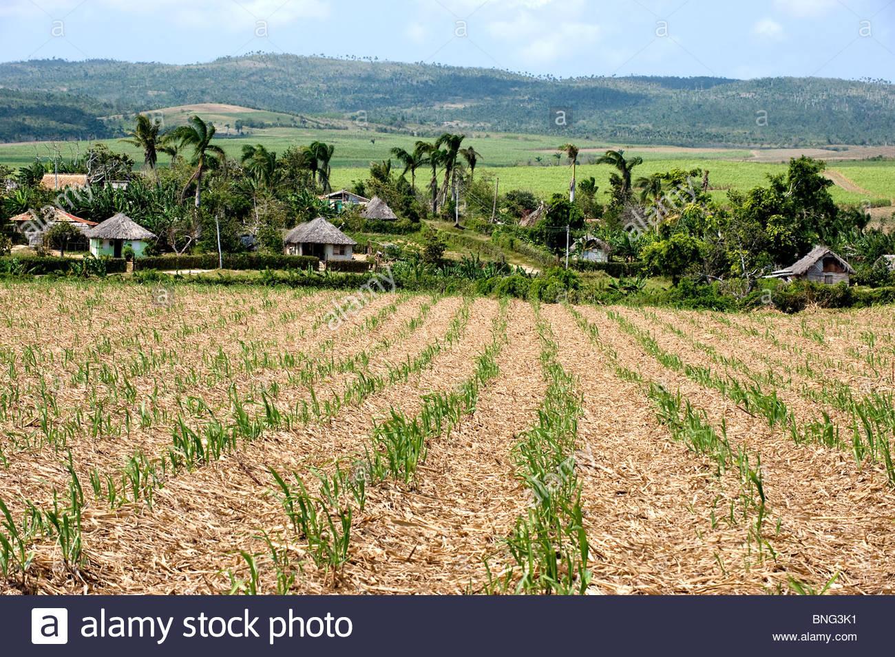 Isolated farmhouses. Province of Holguin,Cuba - Stock Image