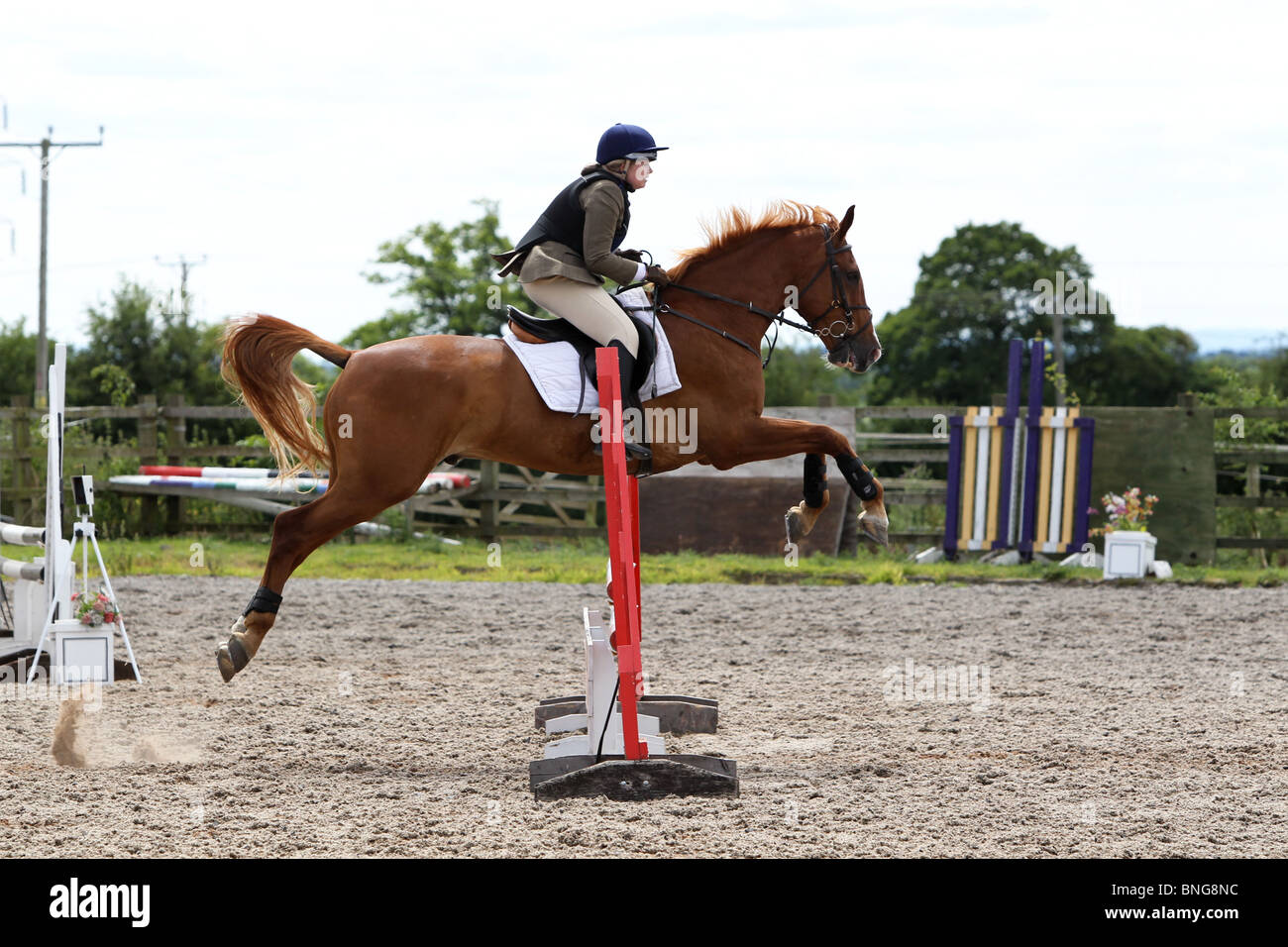 Chestnut Horse Pony Jumping Stock Photo Alamy