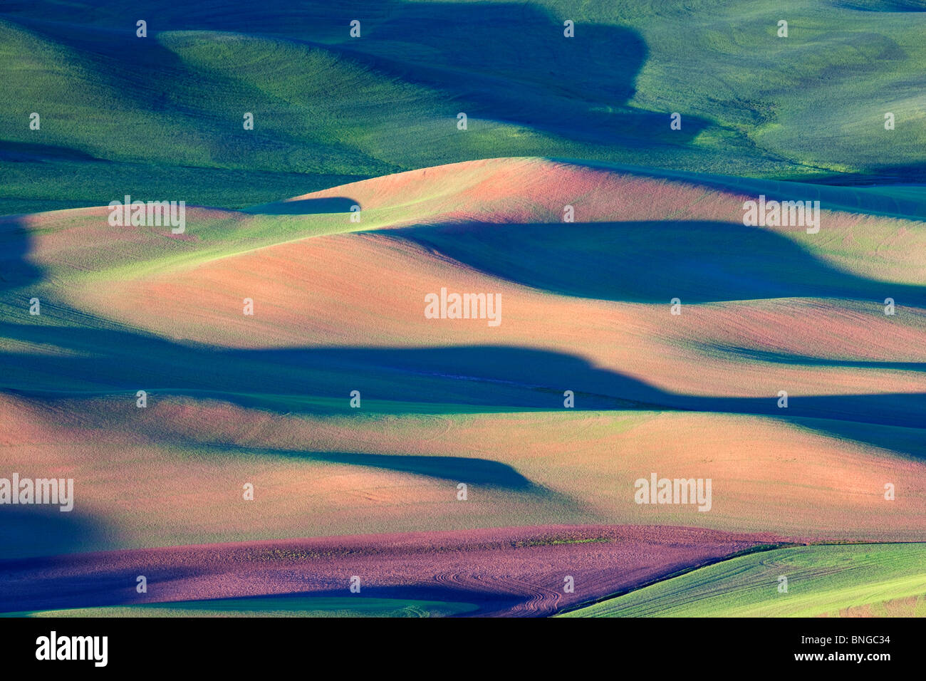 New spring wheat growth. The Palouse, near Colfax, Washington. Stock Photo