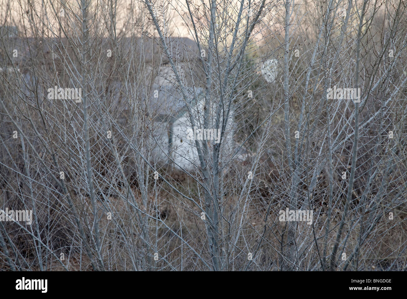 house in Chimayo New Mexico concealed by shrubs - Stock Image