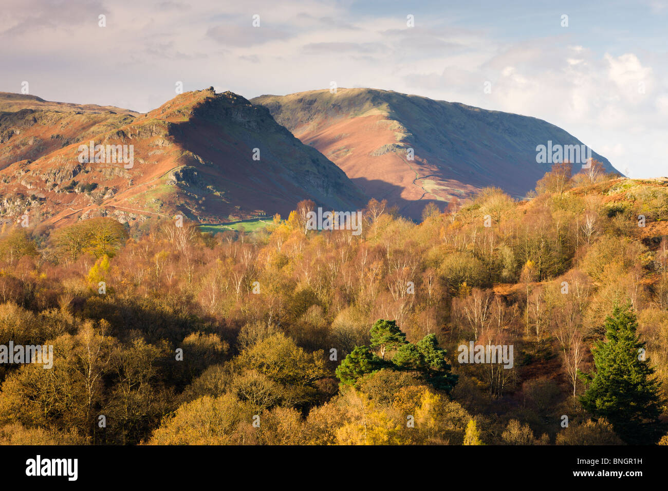 Helm Crag and Steel Fell mountains behind autumnal woodland, Grasmere, Lake District National Park, Cumbria, England. - Stock Image