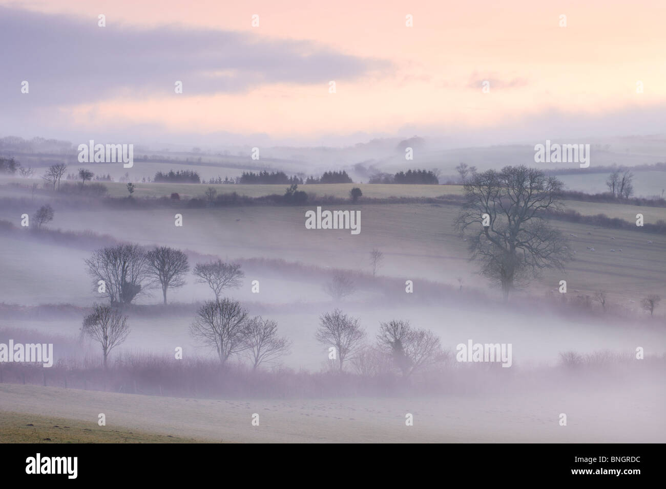 Mist lingers over the landscape by the Flitton Oak, Exmoor National Park, North Molton, Devon, England. Winter (February) - Stock Image