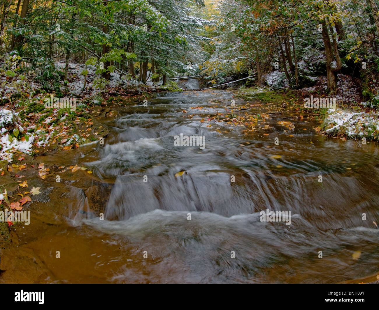 Stream flowing through a forest, Porcupine Mountains Wilderness State Park, Ontonagon, Michigan, USA - Stock Image