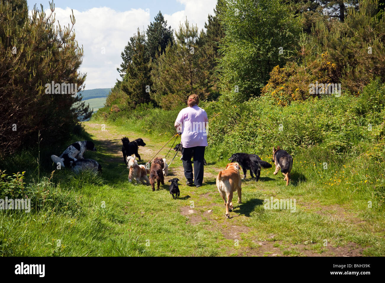 Dogs Kennel Stock Photos Dogs Kennel Stock Images Alamy