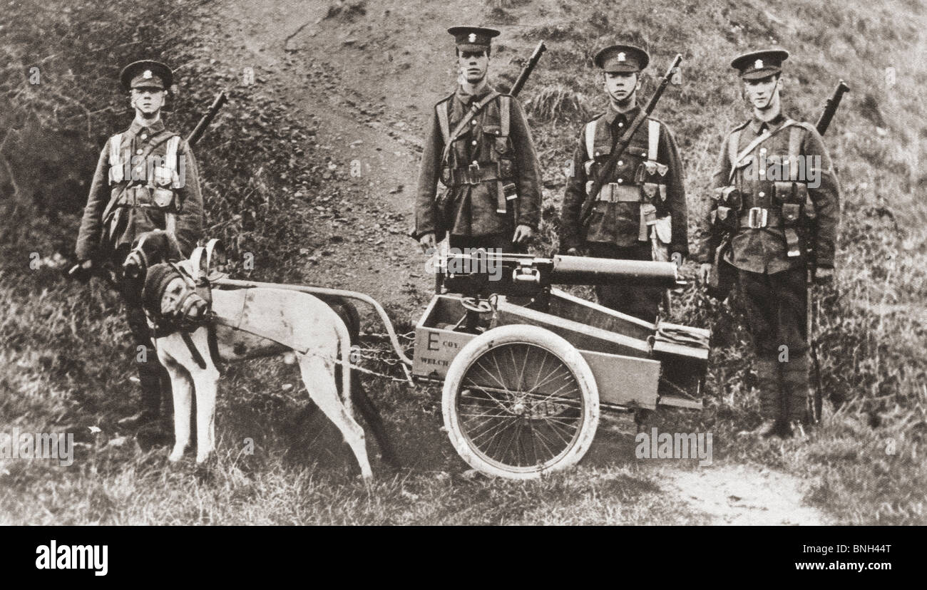 British army soldiers using dogs to pull a machine gun during world War I. Stock Photo