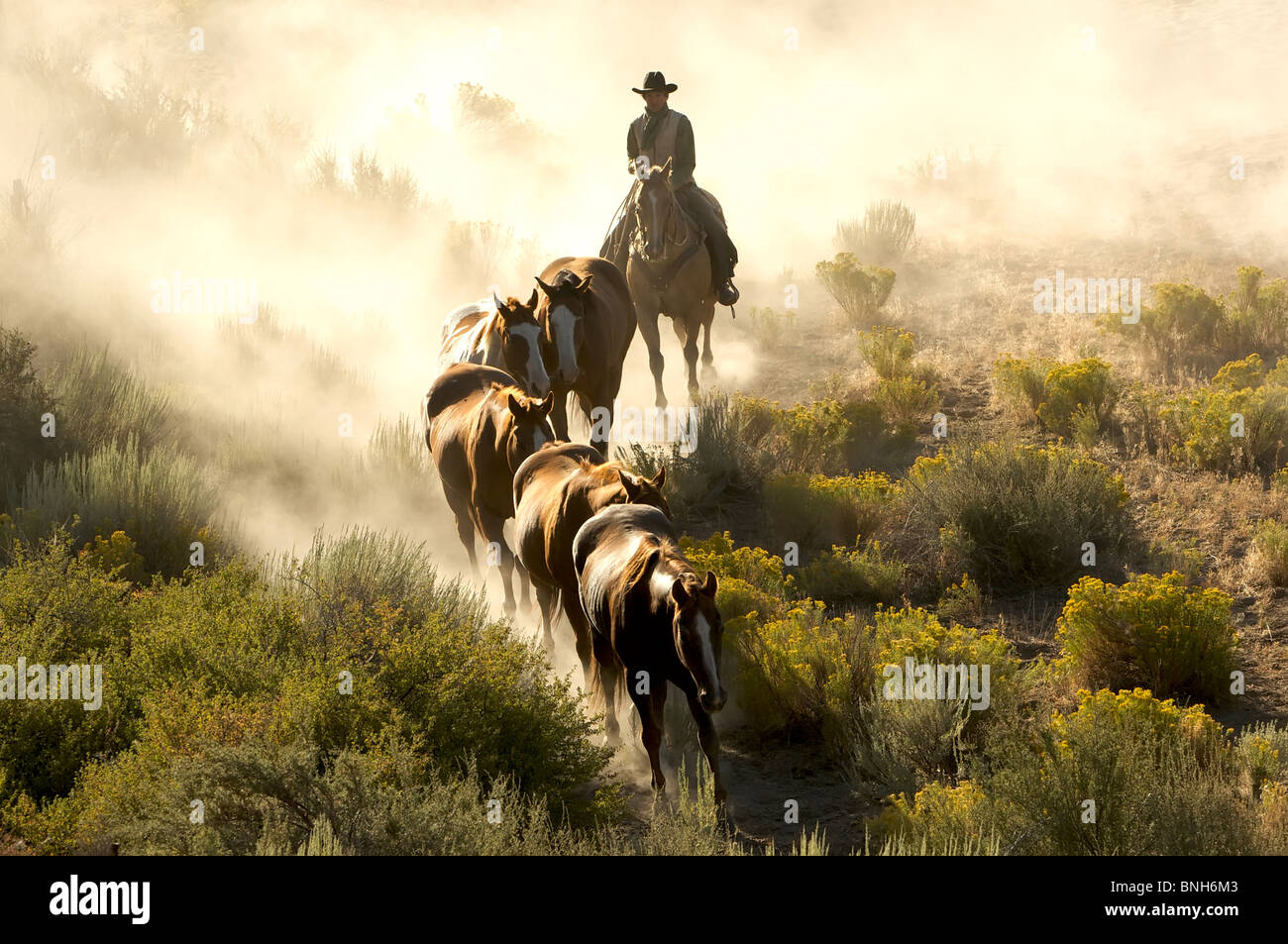 Single cowboy guiding a line of horses through the desert - Stock Image