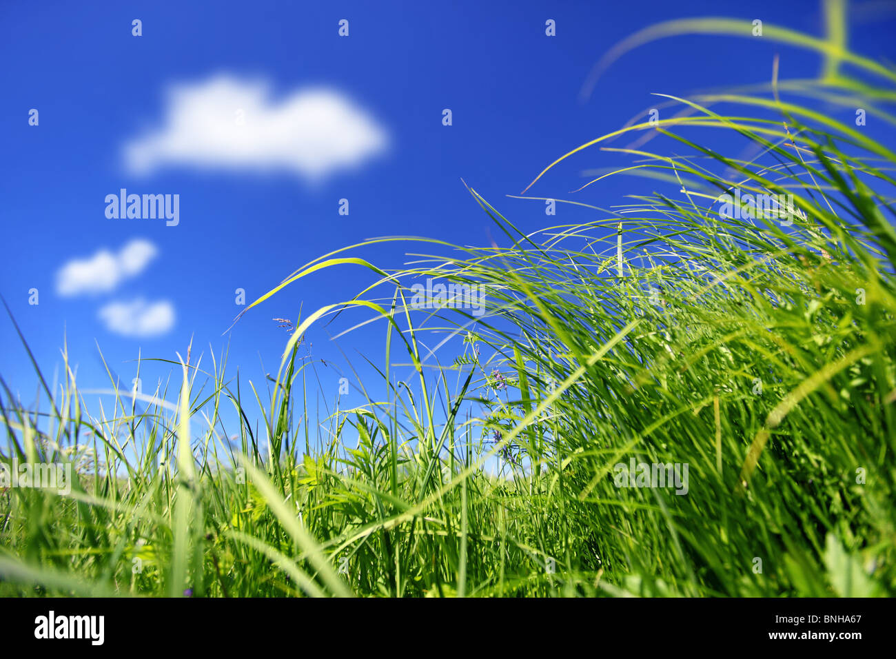 Outdoor wild grass. - Stock Image