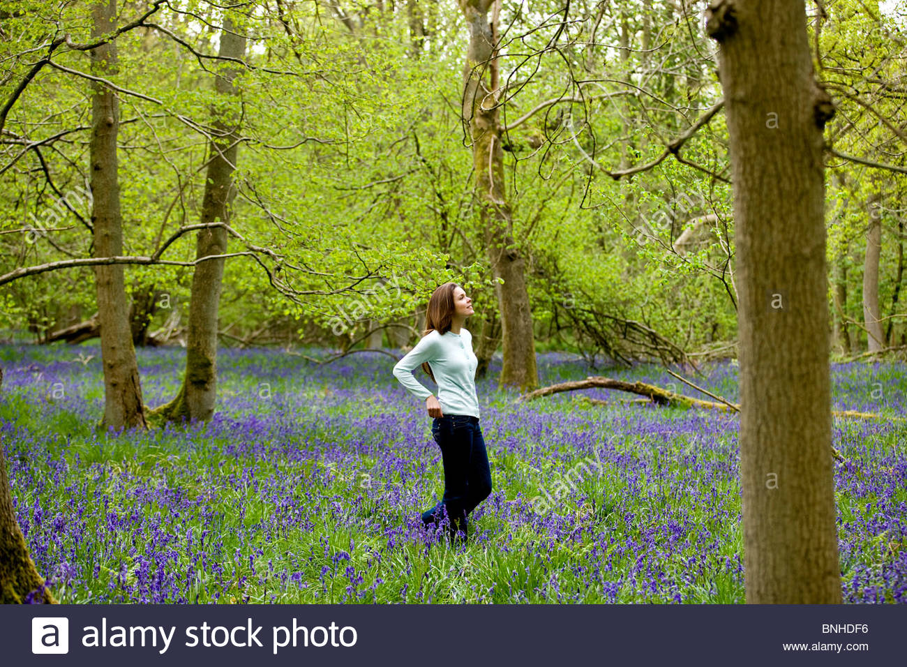 A young woman walking through a bluebell wood - Stock Image