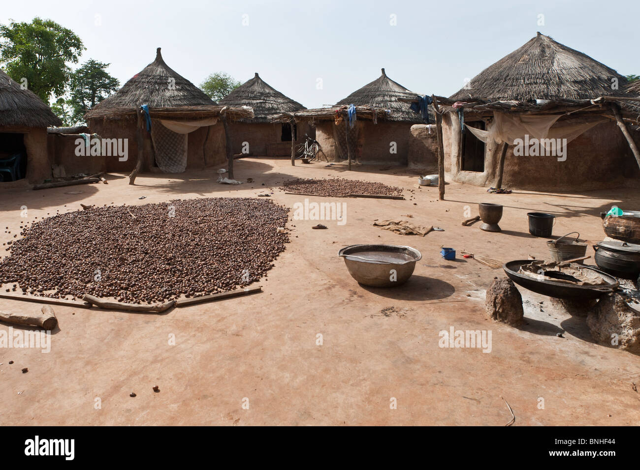 Bemobah household at the village of Sor No. 1, Gonja triangle, Damango district, Ghana. Shea nuts are frying in - Stock Image