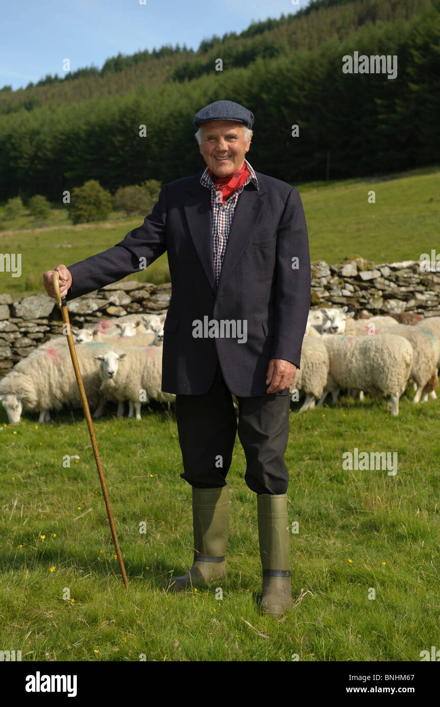 A welsh hill farmer shepherd with his sheep, mid wales UK - Stock Image