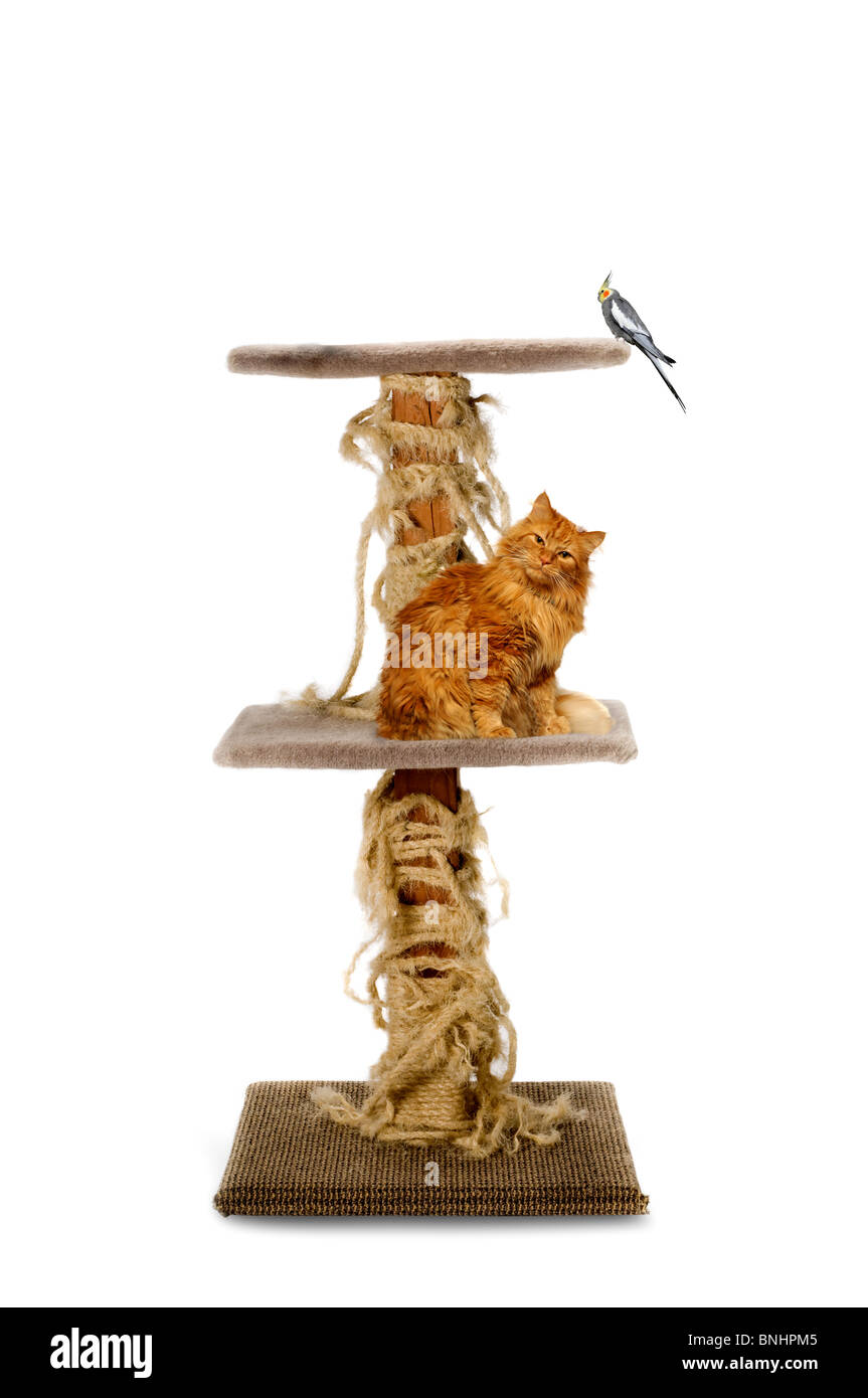 house cat and bird on scratching pole - Stock Image