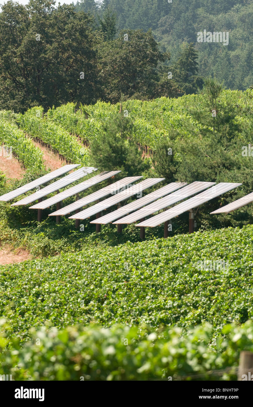 Solar panels in vineyards; near McMinnville ; Willamette Valley , Pacific Northwest, Oregon - Stock Image