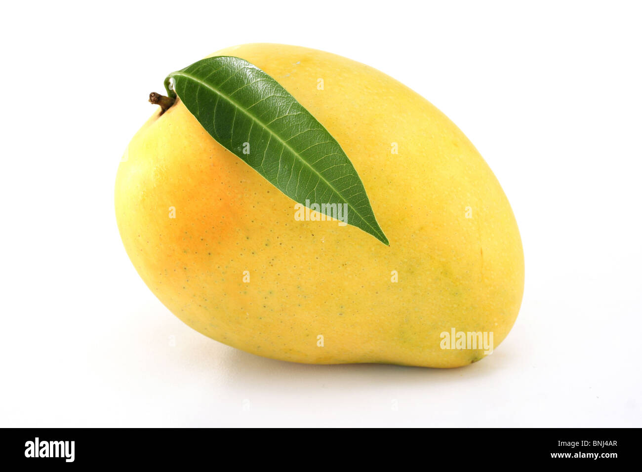 Fresh ripe Mango on white - Stock Image
