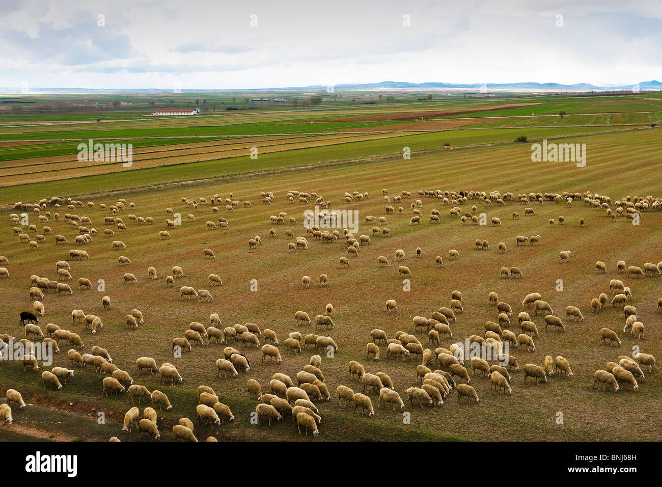 Spain Aragon region area Teruel province herds sheep agriculture field, - Stock Image