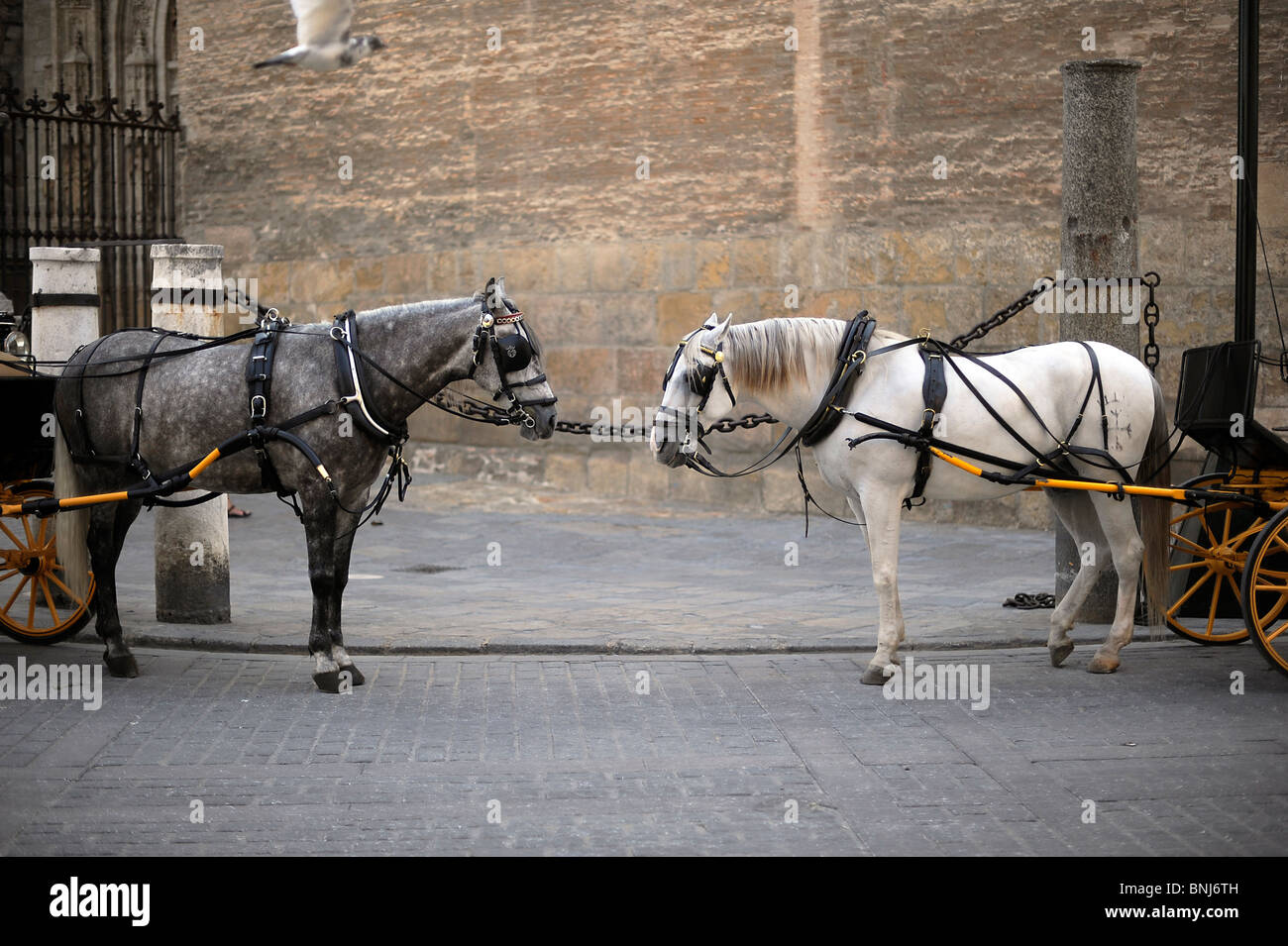 horses seen in Seville, Spain, Spanien, Sevilla, Andalusien, Andalisia - Stock Image