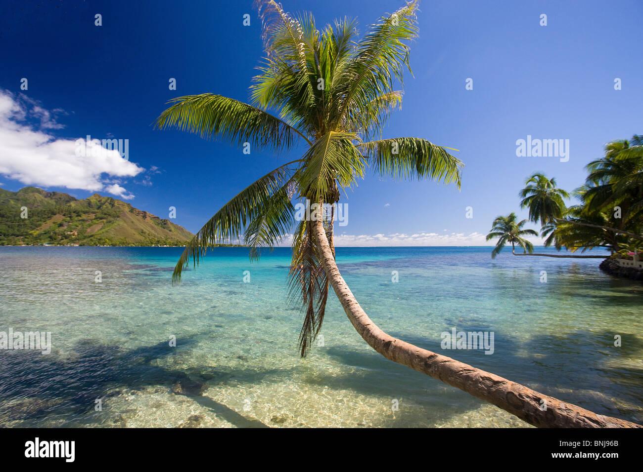 Tahiti Moorea Island Society Islands Society Islands Moorea