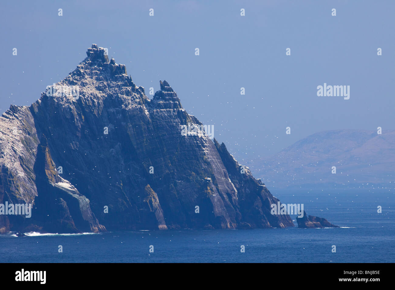 Gannets fly around Little Skellig County Co. Kerry in spring sunshine Republic of Ireland Eire Europe - Stock Image