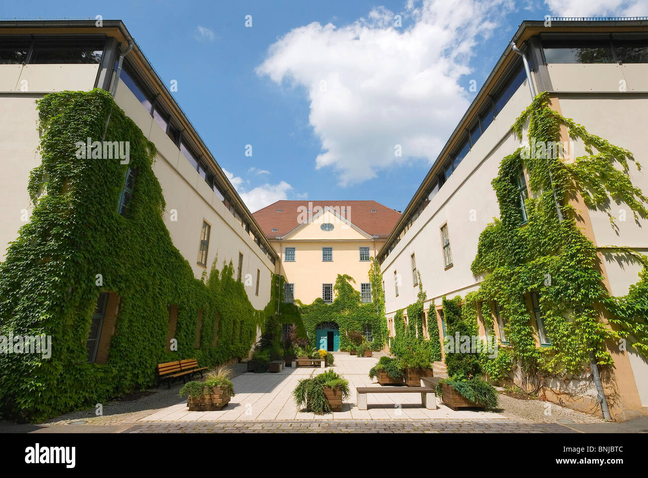 Germany Thuringia Weimar museum for prehistory and early history wild vine court yard culture - Stock Image