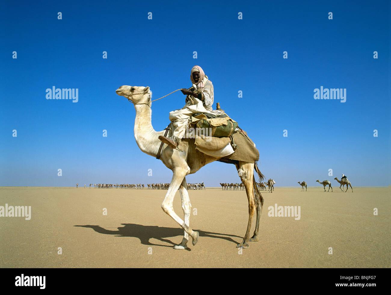 Egypt March 2007 Near Abu Simbel Sahara Desert camel rider man riding - Stock Image
