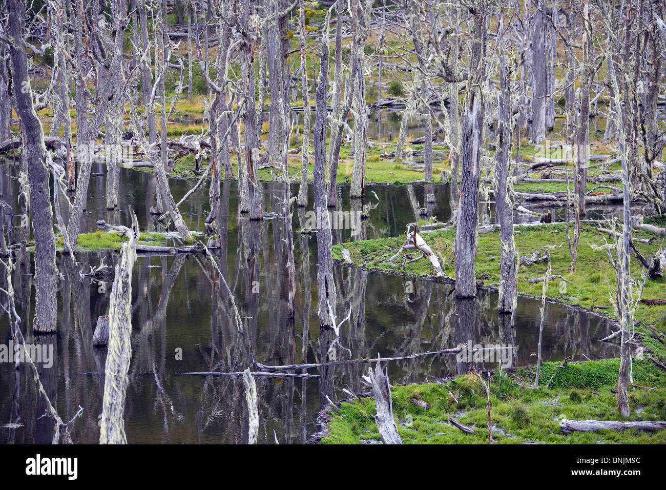 Argentina Südamerika Amerika March 2009 Tierra del Fuego Landscape scenery dead trees nature natural water - Stock Image