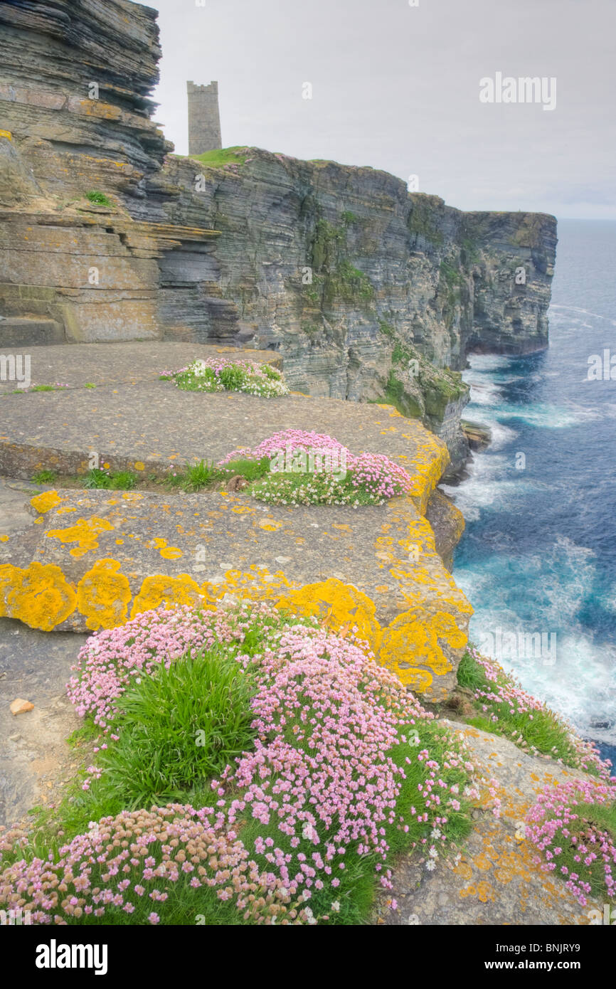 Thrift covered cliffs Armeria maritima Marwick Head RSPB reserve Building is Kitchener memorial Mainland Orkney Stock Photo