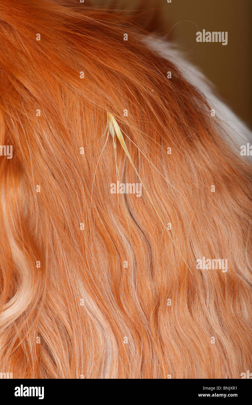 Dogs Ear Stock Photos Amp Dogs Ear Stock Images Alamy