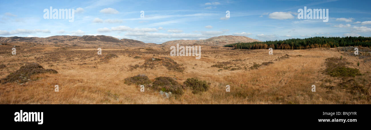 Black Grouse Lekking Ground in Galloway Forest Park - Stock Image