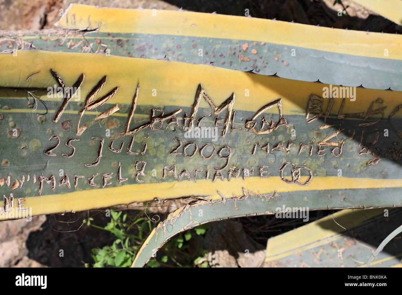 Graffiti on cactus plant leaf in park güell barcelona spain stock image