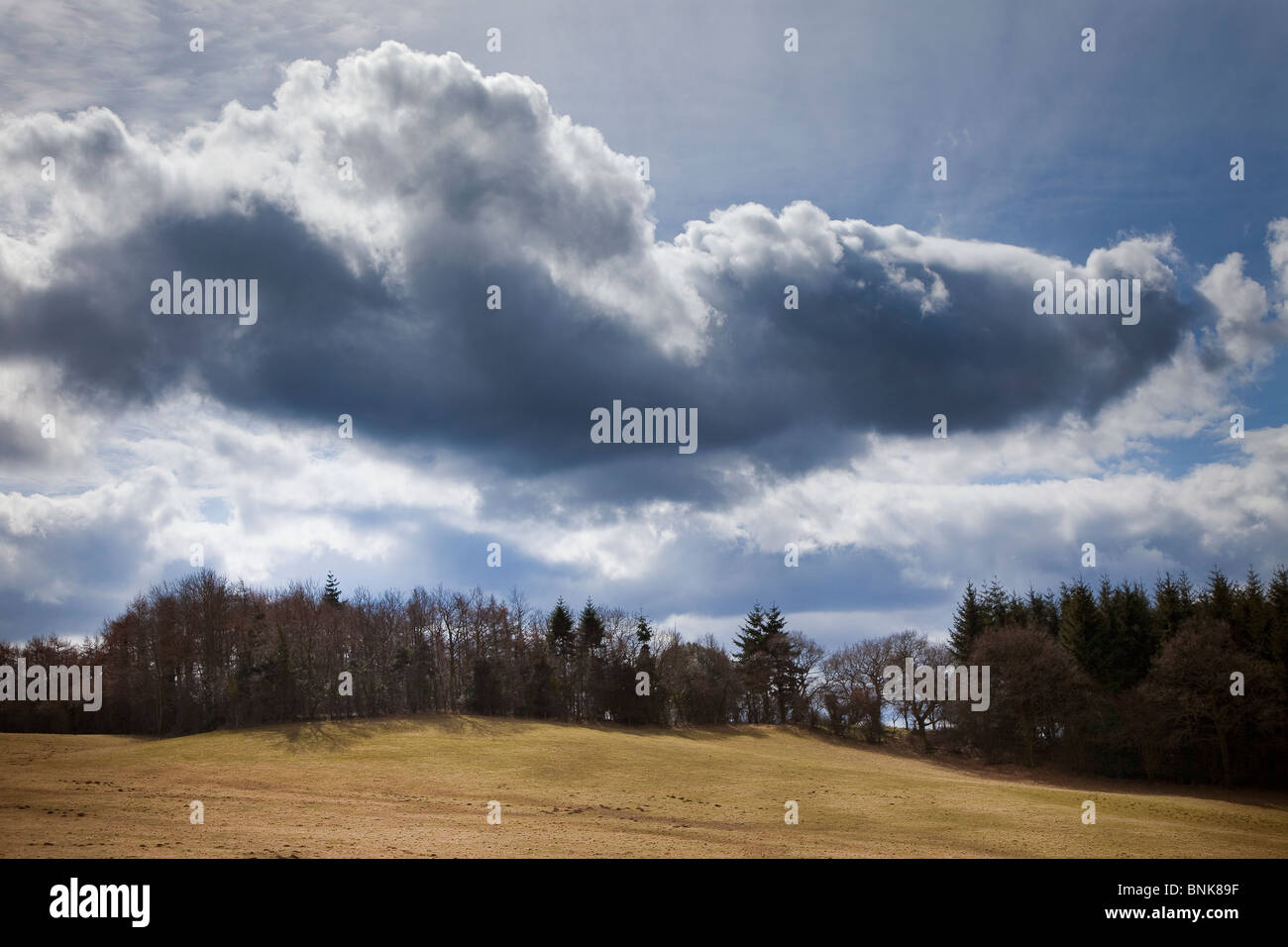 Dark clouds over forest and field Wales UK - Stock Image