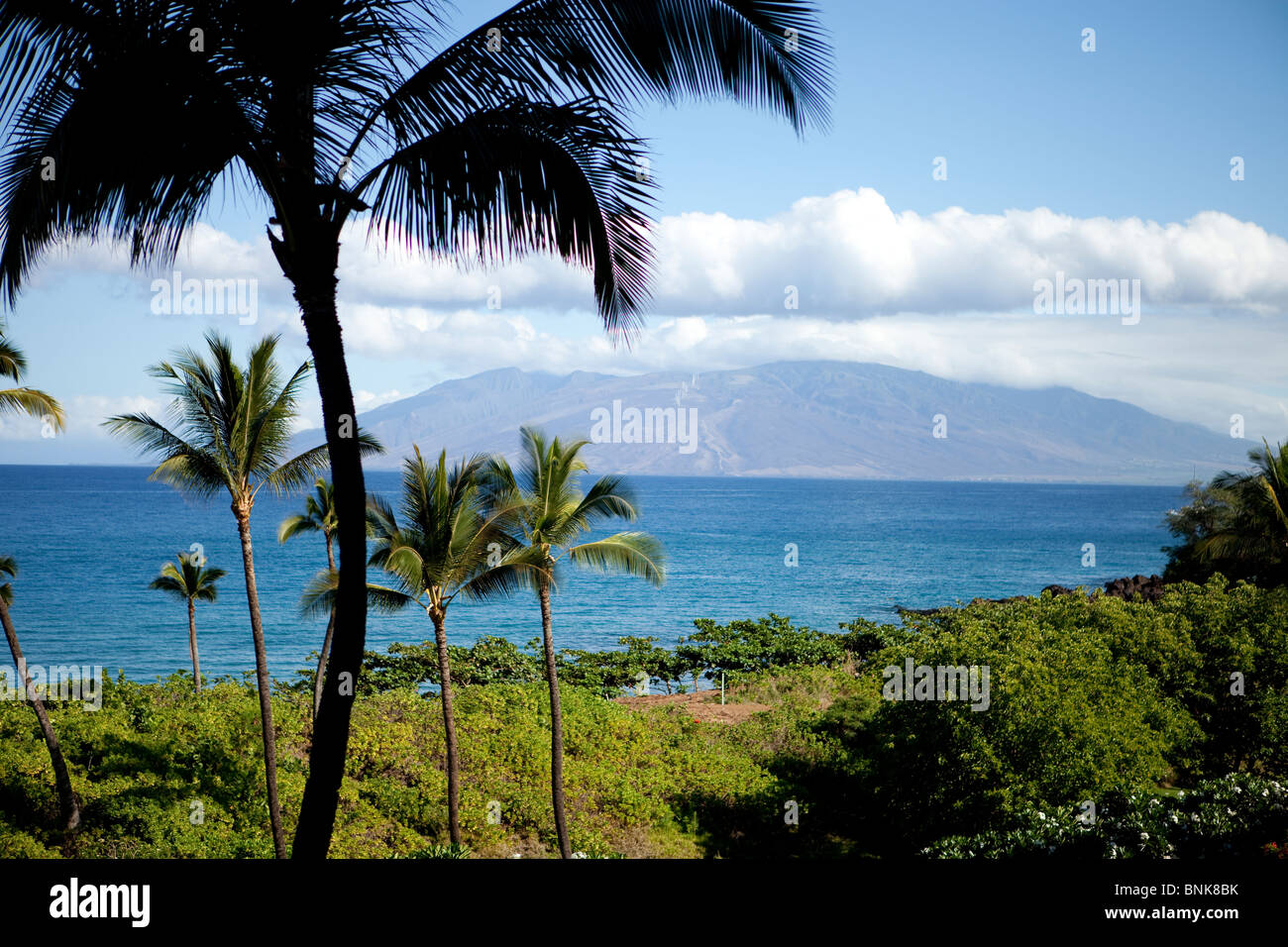 Hawaiian Landscape With Palm Trees And Blue Ocean And Sky On A