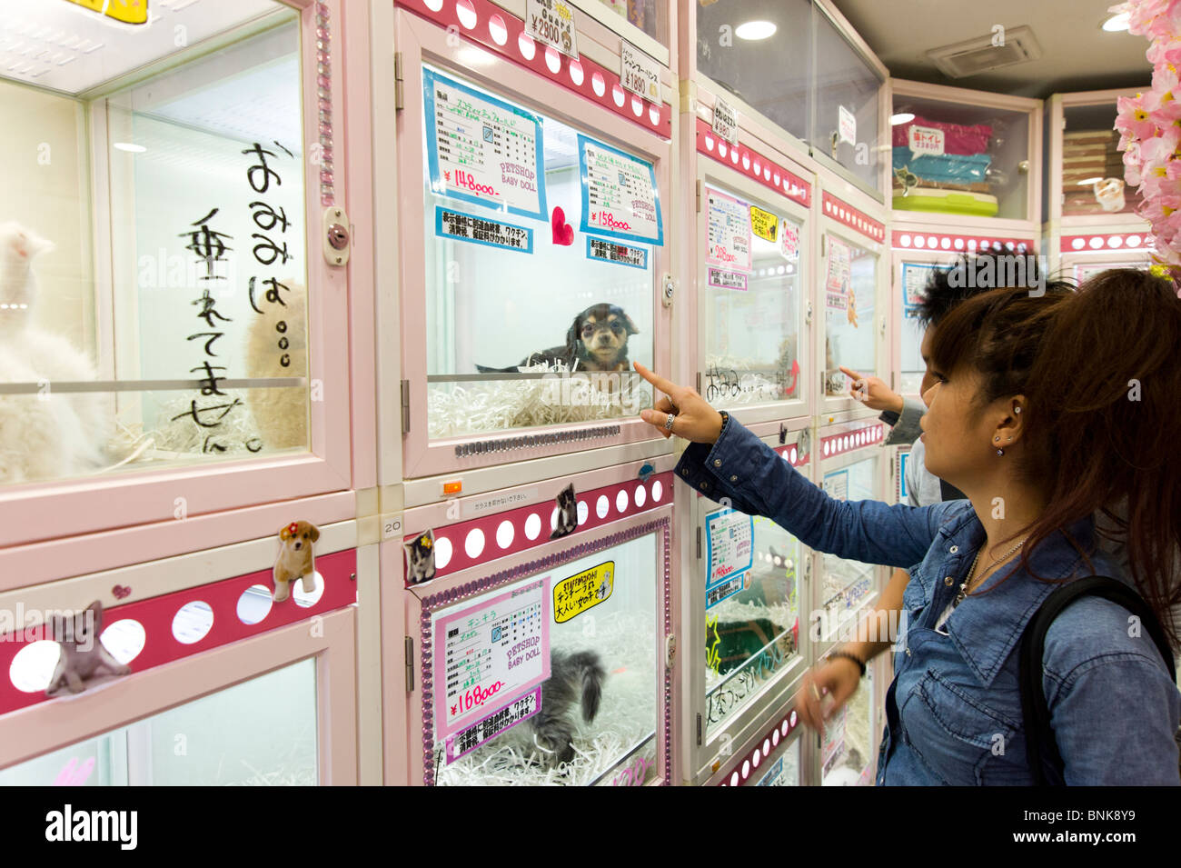 Puppies For Sale In Pet Shop Tokyo Japan Stock Photo 30542269 Alamy