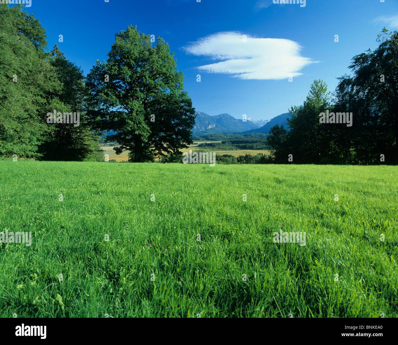 germany murnauer moss nature plants trees meadow field green scenery