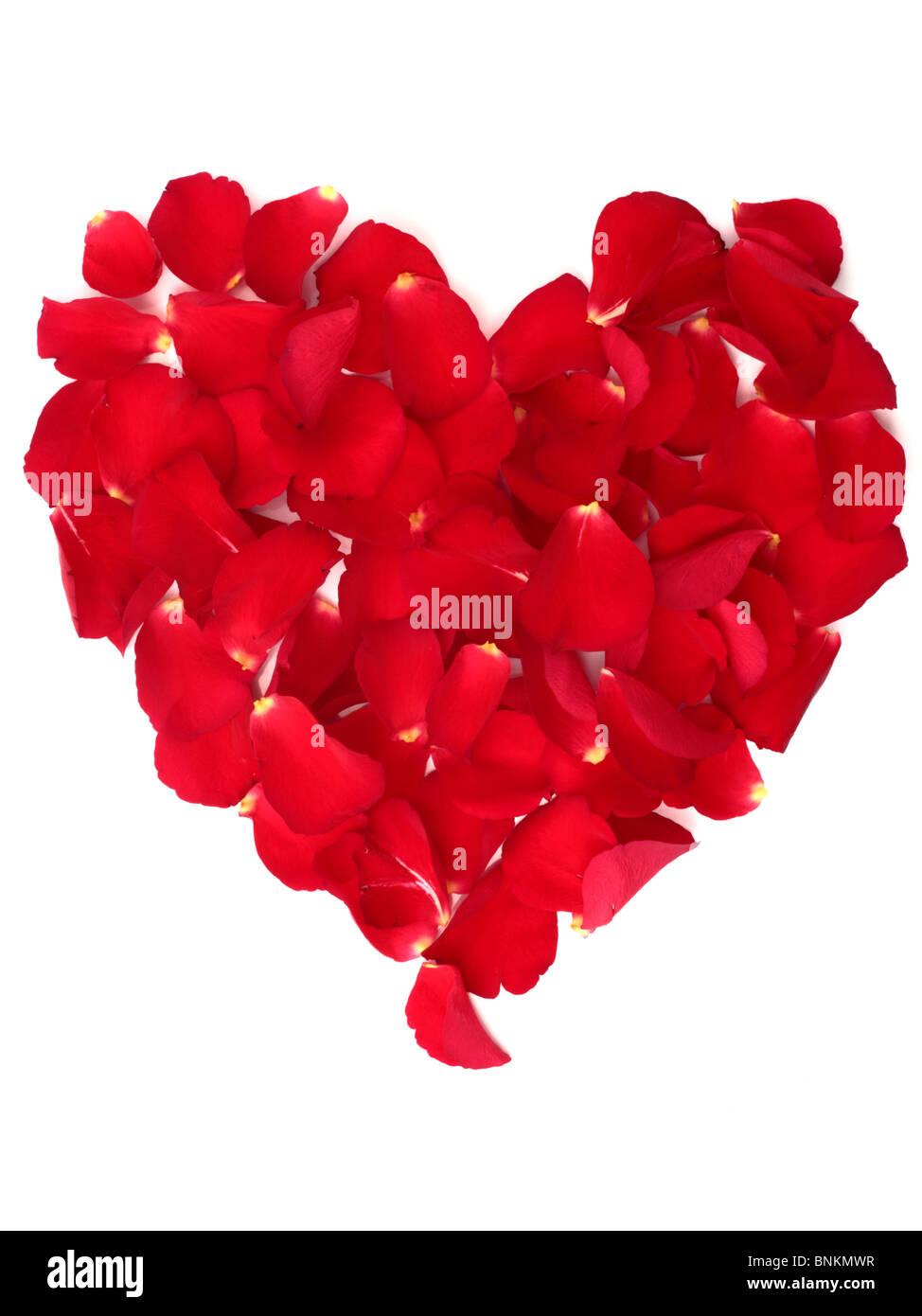 Red rose petal heart shape - Stock Image
