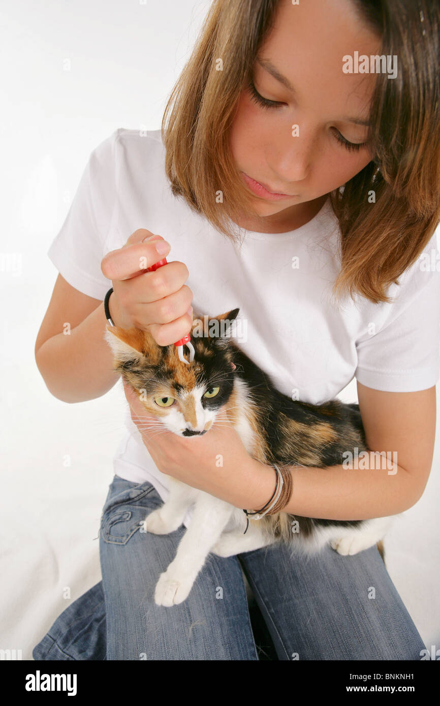 cat gets a tick removed Stock Photo