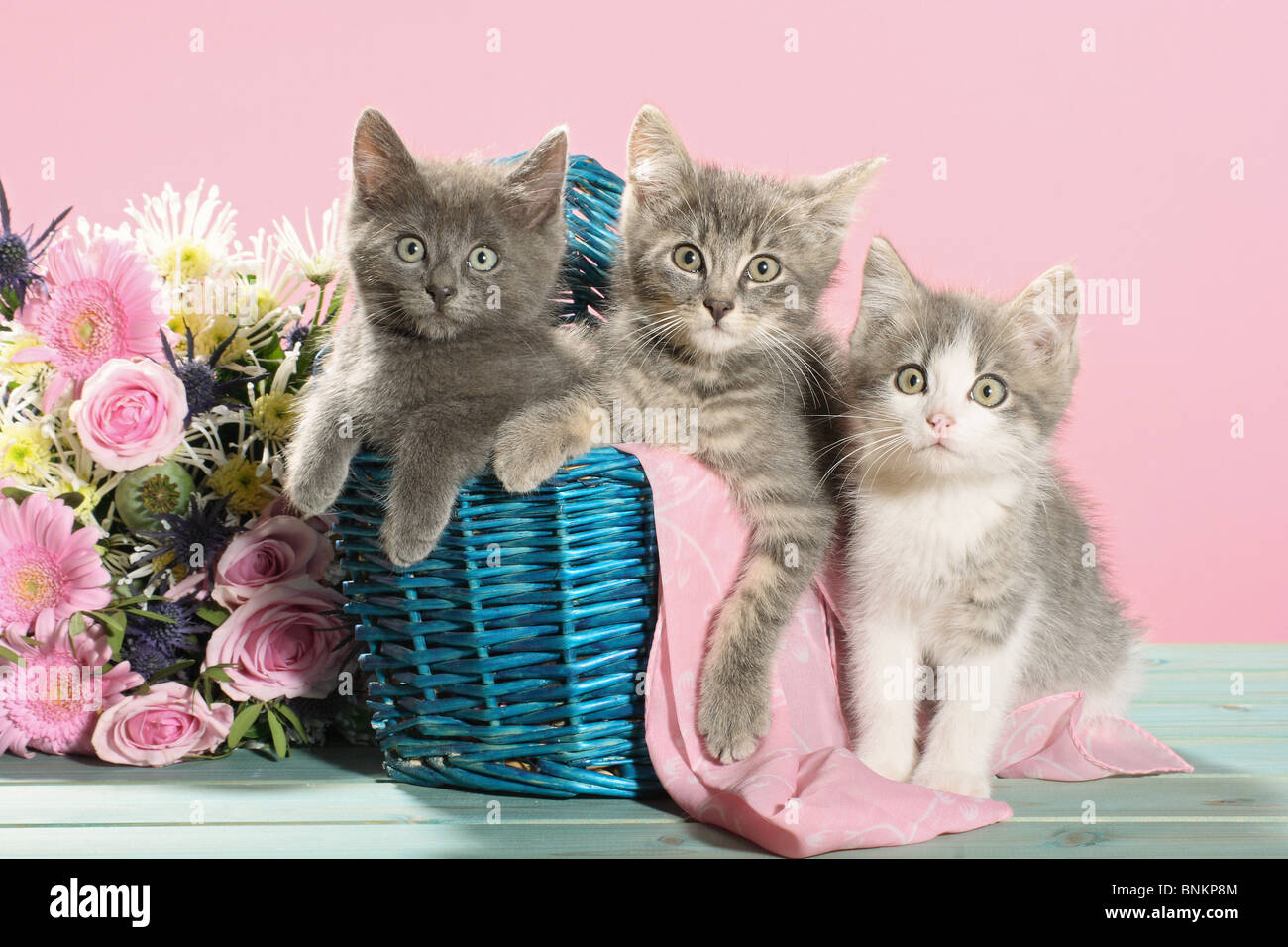 domestic cat three. Three kittens in a basket next to flower bouquet ...