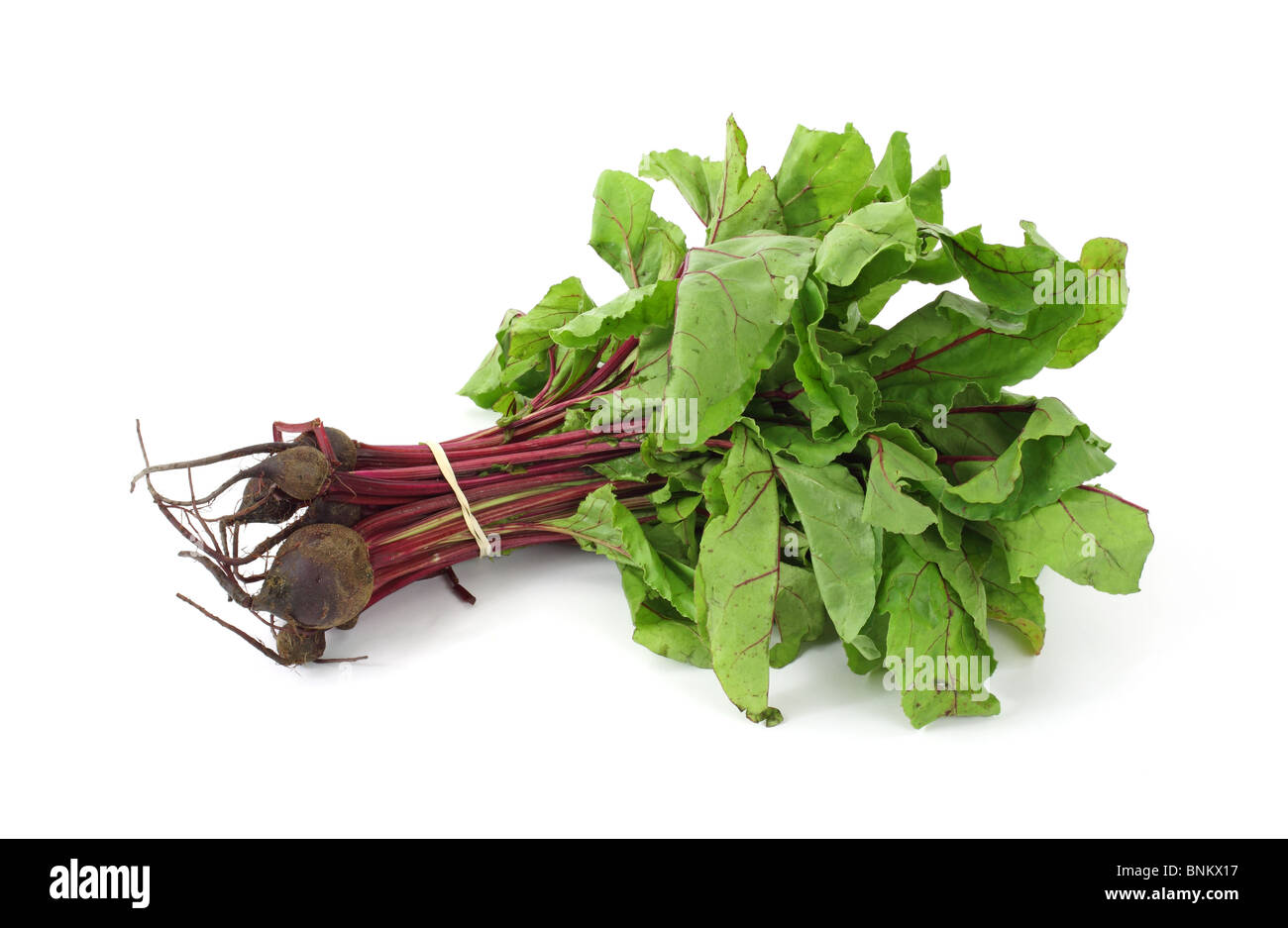 Beet greens with small beets - Stock Image