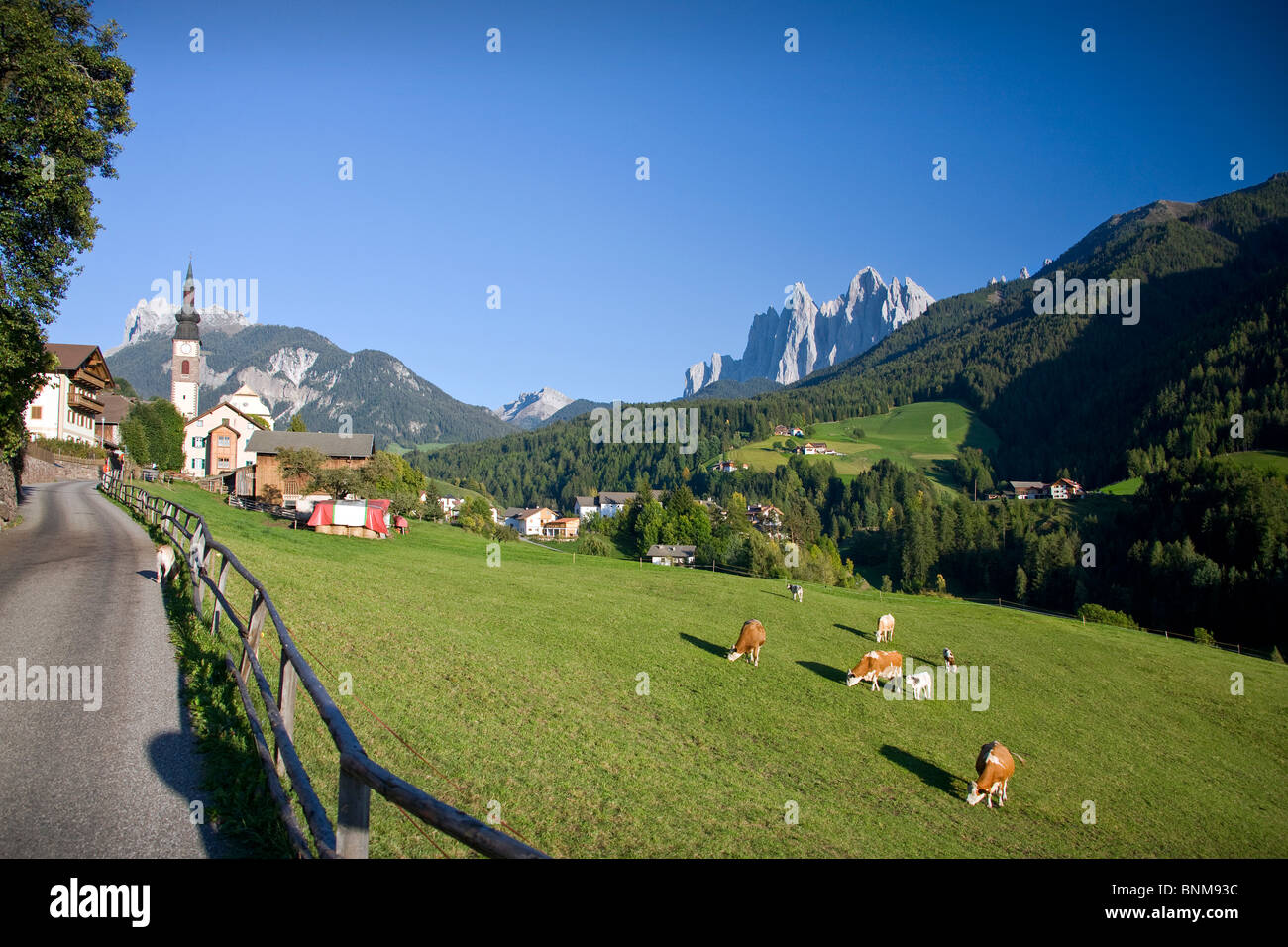 Italy Dolomites Alps fun Villnöss mountains wood forest meadows cows holidays travel, - Stock Image