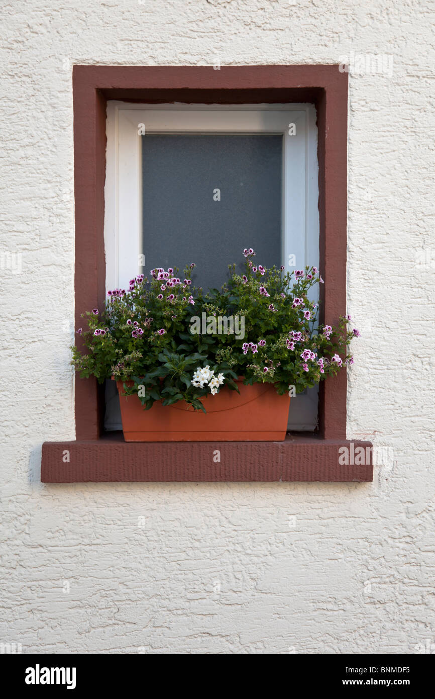 a window and a flower box - Stock Image